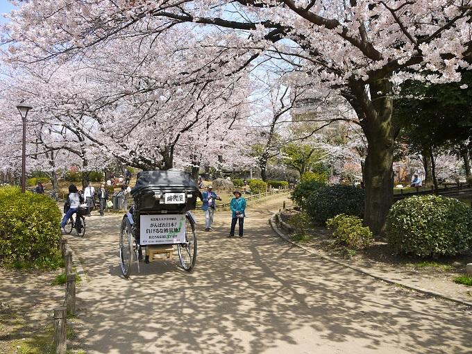 Nằm ở trung tâm thủ đô Tokyo,Công viên Sumidalà một trong những điểmngắm hoa nổi tiếng tại Nhật Bản. Công viên này thường xuyên đông đúc vào dịp hahami (lễ hội hoa anh đào), trong đókhu vực đông khách dạo chơi nhất là giữa cầu Azumabashi và Sakurabashi. 640 cây hoa anh đào nằm dọc bên sông hướng ra góc nhìn Tokyo Skytree, khi đêm xuống được thắp sáng lung linh tạo không gian lãng mạn.