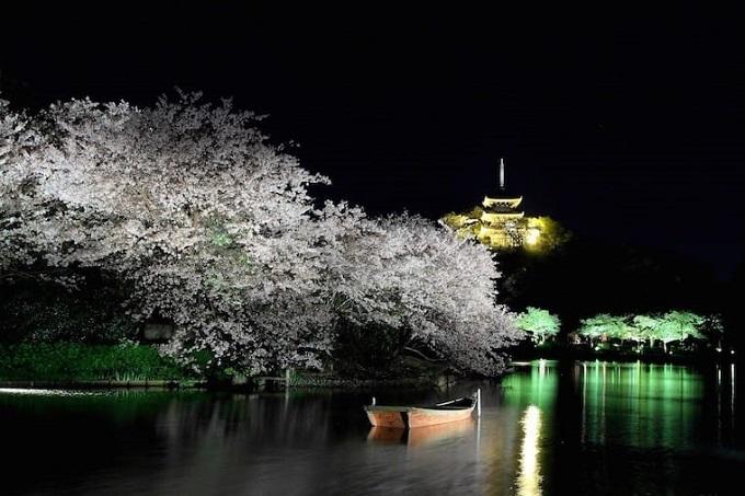 Sở hữu khoảng 300 cây hoa anh đào,công viên Ritsurin (Kagawa)thường có trình diễn ánh sángtrong thời gian chào đón lễ hội ngắm hoaanh đào.Du khách cũng có thể tận hưởng một thế giới mới lạ, khác biệt so với ban ngày như sự phản chiếu màu sắc rực rỡ như những tấm gương của những đường hầm hoa anh đào, sự tương phản màu sắc của những cây thông xanh với nét bóng loáng của hoa anh đào ban đêm.