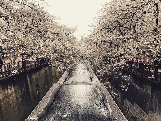 Điểm ngắm hoa nổi tiếng không kém tại Tokyo làMegurogawa -con sông dài khoảng 8km chảyquaquận Setagaya, Meguro, Shinagawa. Khi mùa xuân đến, khoảng 800 cây hoa anh đào nở trải dài khoảng 4km từ cây cầu Ikejiri dọc theo con sông đến quận Shinagawa, thu hút rất nhiều ngườiđến đây.Xung quanh khu vực này có rất nhiều cửa hàng, nhà hàng, các bạn có thể vừa dùng bữa,mua sắmvừa chiêm ngưỡng hoa anh đào ban đêm.Tour du lịch Nhật Bản mùa hoa anh đào 2019cho bạn cơ hội thỏa sức thăm quan các điểm ngắm hoa đào đẹp tạiTokyo. Trong hành trình 4 ngày 3 đêm, du khách còn được đến thăm Hakone,Fuji.mt,Yamanashi cũng như tham gia lễ hội hoa anh đào sớm của người dân thành phố Miura.