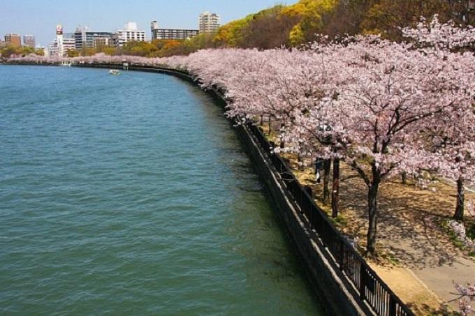 Chảy qua quận Miyakojima và quận Kita của thành phốOsaka, sông Okawalàđịa điểm ngắm hoa anh đào được nhiều người biết đến, với khoảng 4.800 cây hoa anh đàoở quanh cây cầu Tenmabashi đến khu vực cầu Sakuranomiyabashi. Hai bên bờ sông Okawa còn có công viên Kemasakura Nomiya và các công trình kiến trúc đầu thời kỳ Minh Trị như Zouheikyoku hay Senbukan.Tour du lịchkhám phá cung đường vàng Nhật Bản6 ngày 5 đêm đưa du khách tham quan nhiều điểm đến nổi tiếng của Osaka như chùa Todaiji, lâu đài Osaka,trung tâm thương mạiShinsaibashi... Đêm đến, bạn còn có thời gian tự do khám phá Osaka về đêm với các điểm ngắm hoa đào đêm hấp dẫn.