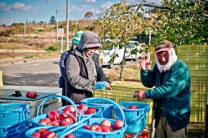 Chàng trai Việt say lòng trước vườn táo đẹp như cổ tích ở Nhật Bản