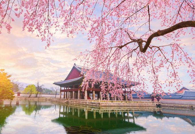 Dự báo thời điểm hoa anh đào nở ở 8 điểm ngắm hoa nổi tiếng Hàn Quốc - 6