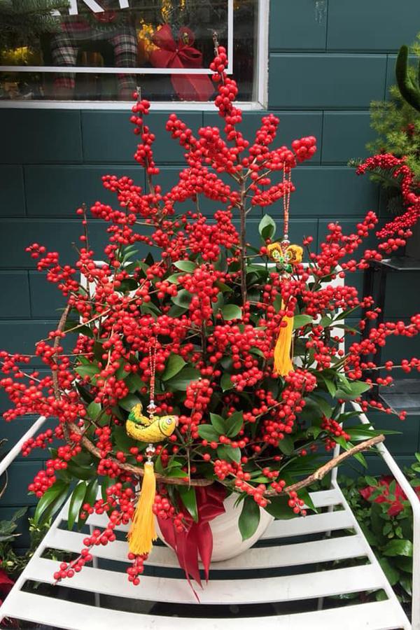 Một bình hoa đông đào đỏ tại một cửa hàng ở