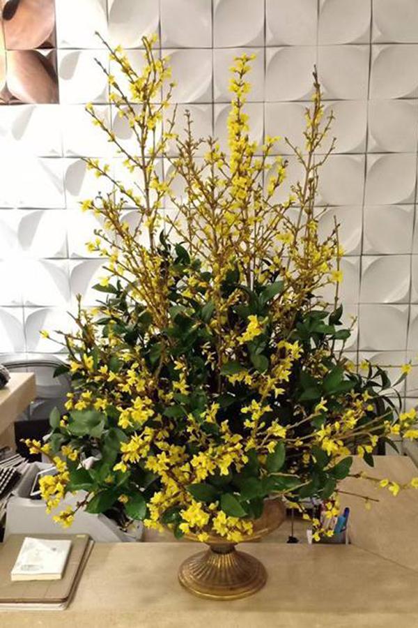 Mai Mỹ được ưa chuộng bởi sắc vàng truyền thống như mai Việt nhưng tươi lâu và nở đồng loạt. Ảnh: Kyah Flower.