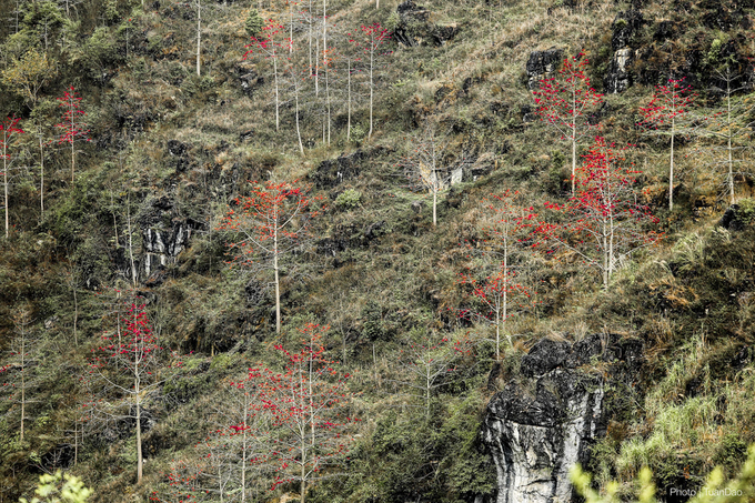 Tháng 3, hoa gạo nhuộm đỏ Hà Giang