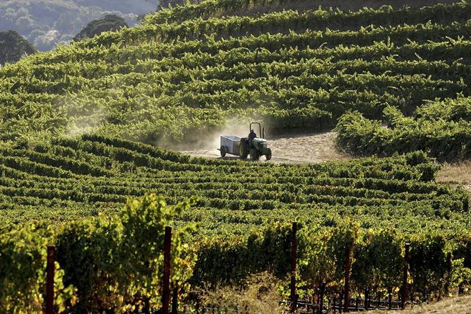 Ngoài lĩnh vực thời trang và đua ngựa, hai anh em nhàWertheimer cũng mở rộng kinh doanh sang sản xuất rượu vang. Năm 1994, hai anh em này đã mua nhà máy rượu vang Bordeaux Chateau Rauzan-Segla. Năm 2015, Chanel đã mua nhà máy St. Supery ở thung lũng California Napa.