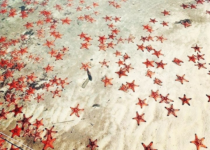 Xõa hết cỡ ở 'vương quốc sao biển' tại Rạch Vẹm - Phú Quốc
