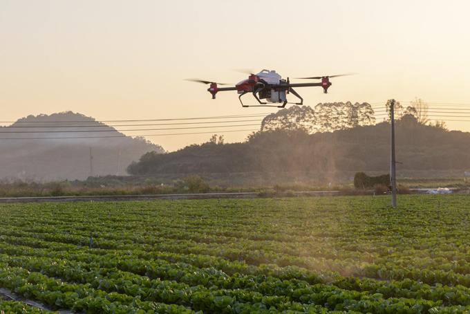 Máy bay không người lái phun thuốc bảo vệ thực vật trên cánh đồng. Ảnh: SCMP.