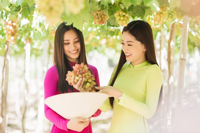 Tiểu Vy (trái) -Phương Nga tận tay hái vàthưởng thức những chùm nho đặc sản của Ninh Thuận.
