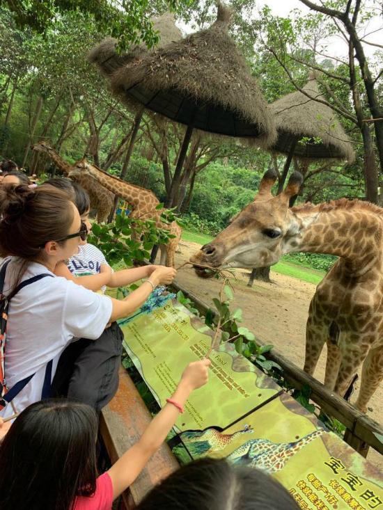 Các con của Lê Tư thích thú với hươu cao cổ.