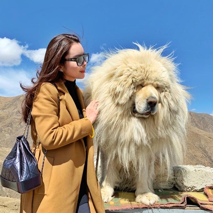 Huỳnh Vy chụp ành cùng một chú chó ngao nổi tiếng của Tây Tạng.