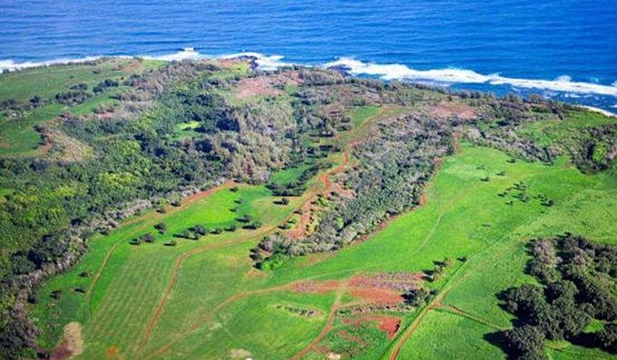Thảm thực vật trên đảo Kauai, Hawaii. Ảnh: Trulia.