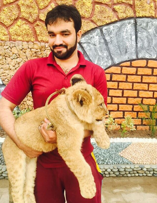 Hes just a teddy bear, really! Lion relaxes on bed as its owner reveals he gives it freedom to roam family home - 4
