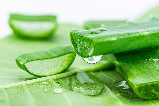 Lô Hội: Mỗi lá lô hội chứa một chất lỏng dạng nước gel có khả năng làm dịu và chữa lành các mô sẹo, đồng thời có tác dụngchống viêm và làm dịu các vấn đề da mãn tính. Chiết xuất lá lô hội với 20 khoáng chất, 20 axit amin, 12 vitamin và các enzyme hoạt động có khả năng bảo vệ da khỏi tác hại của tia cực tím, các gốc tự do và các hợp chất gây ra những dấu hiệu lão hoá sớm, đồng thời kích thích các tế bào nguyên bào sợi sản xuất collagen.