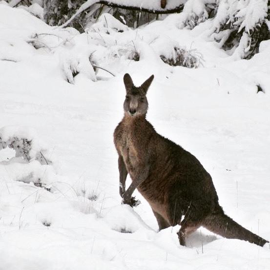 Australia sở hữu mùa hè bất tậnDo nằm ở Nam bán cầu nên khi phần lớn dân cư thế giới đang đón mùa đông thì ở Australia đang là mùa hè. Do đó, nhiều người lầm tưởng Australia là quốc gia nhiệt đới, quanh năm nắng nóng. Các thành phố phía Nam nhưSydney, Melbourne, Canberra và Adelaide đều phải trải qua mùa đông lạnh giá. Nhiệt độ thường ở mức 0 độ C, thậm chí nhiều vùng bao phủ trong tuyết trắng.