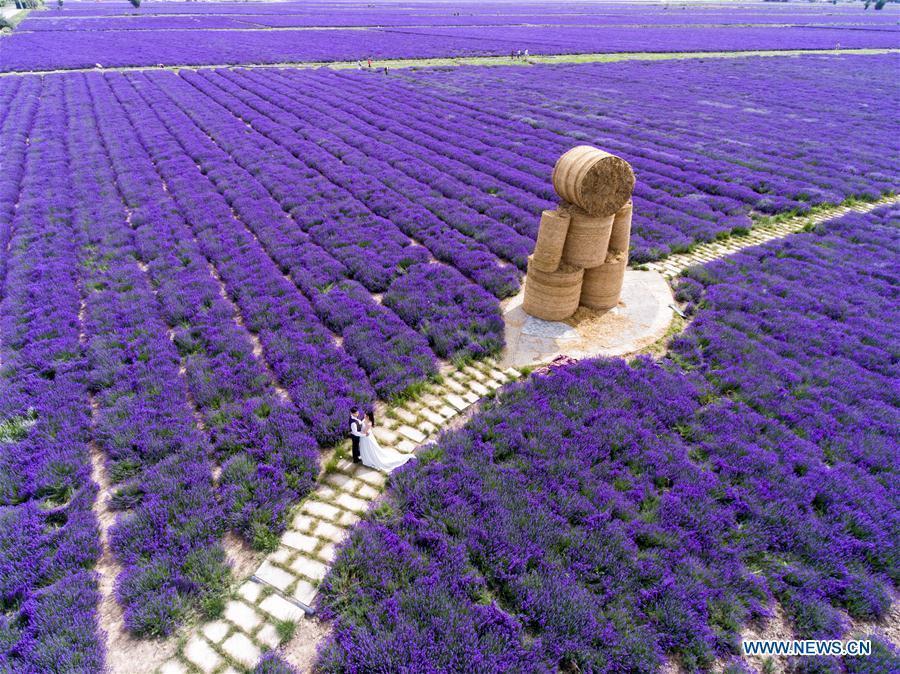 Sắc tím oải hương ở Tân Cương, Trung Quốc