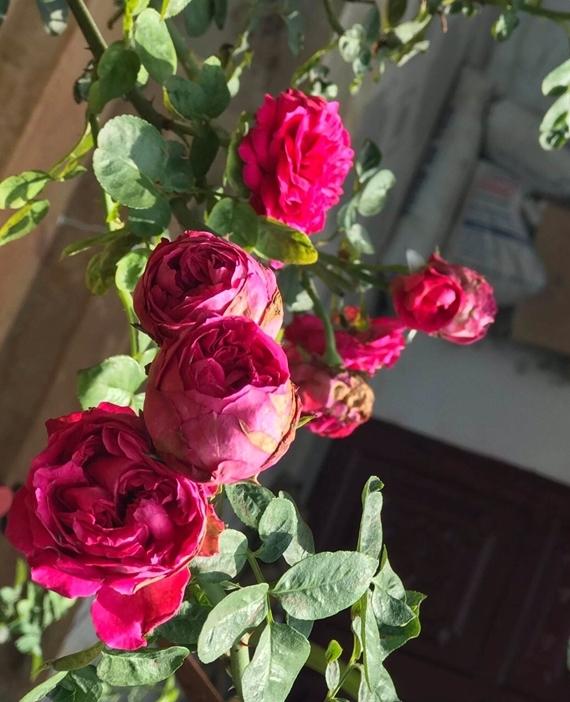 Các loài hoa nở bung, hương thơm ngào ngạt tạo điểm nhấn cho không gian.