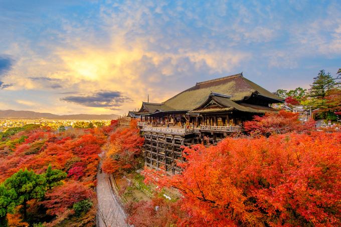 Nhật Bản vào thu rực rỡ sắc màu. Ảnh: SS.