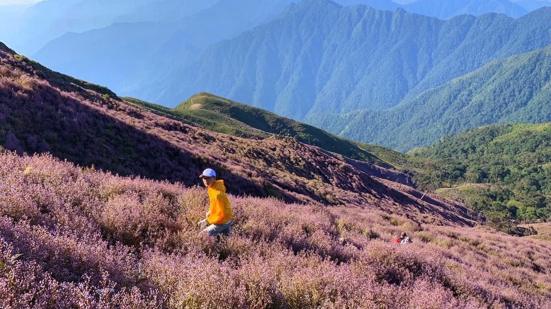 Biển hoa tím cao hơn mây ở Yên Bái