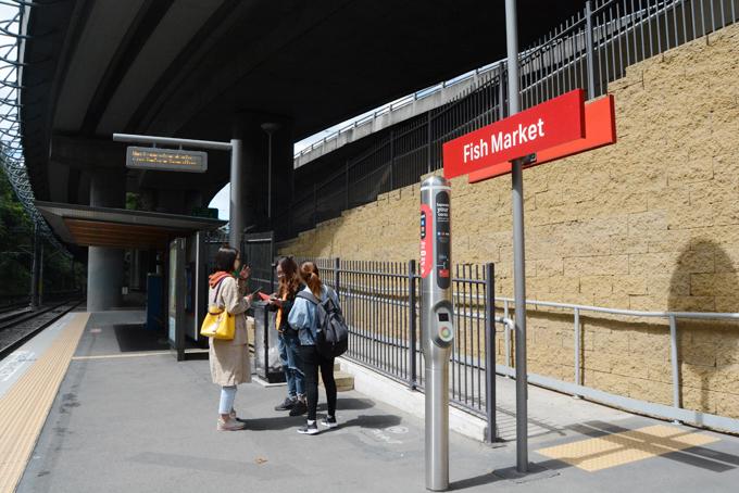 Chợ cá Sydney mở cửa từ 7h đến 16h tất cả các ngày trong tuần. Để tới đây, bạn có thể đi tàu điện (tram) theo tuyến  L1 Dulwich Hill Line hoặc xe bus số 501, sau đó đi bộ một chút là tới.