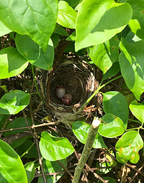 Không những chú trọng vào các phương pháp trồng rau sạch, Joanna còn mong muốn tạo ra hệ sinh thái hoang dã trong khu vườn của mình. Vì thế, cô không áp dụng các biện pháp phòng tránh ong, côn trùng mà lắp những chiếc bồn nhỏ đựng thức ăn cho chúng xung quanh vườn. Thỉnh thoảng, những chú chim còn làm tổ và đẻ trứng ở đây.