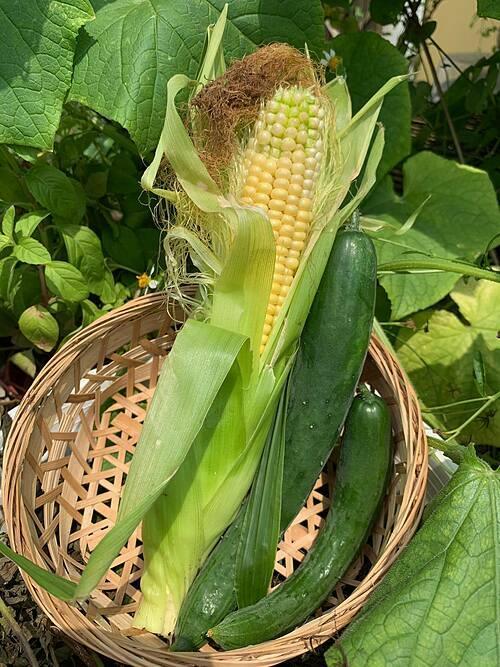 Khu vườn sân thượng của cô gái trẻ có kích thước 20m x 7m. Cô trồng hoa, một số loại thảo mộc/gia vị hiếm, rau - củ - quả (dưa chuột, chanh leo, ngô, đậu, lạc, bí ngô, đậu biếc, ớt, hành tây, rau chân vịt...).