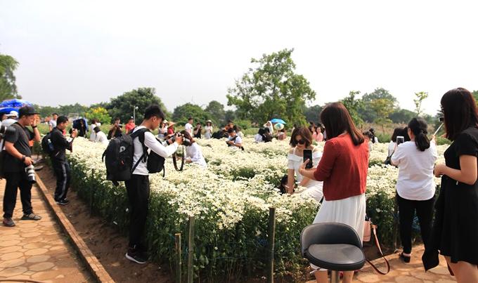 Ngày cuối tuần, tại vườn hoa Bãi đá sông Hồng hàng trăm người chen lấn nhau chụp ảnh với cúc họa mi. Ảnh: Nguyễn Ngoan.