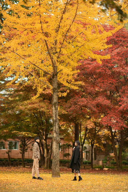 Nếu muốn bắt kịp vẻ đẹp mùa thu lá đỏ, bạn nên ghé thăm xứ sởkim chi từtháng 9 tới tháng 11. Tiết trời khô hanh, mát mẻ vào khoảng thời gian này cũng tạo thuận lợi cho cô dâu chú rể khi chụp hình ngoại cảnh.