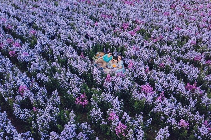 Cách trung tâm Chiang Mai khoảng 15 phút đi xe ô tô, I love flower farm là điểm đến được ưa chuộng của du khách mỗi khi có dịp đến thành phố phía băc Thái Lan. Hoa trồng theo mô hình của các trang trại châu Âu, từng luống hoa thẳng tắp, trải dài trông đẹp mắt.