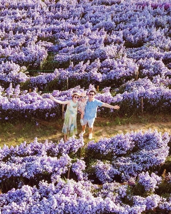 Hoa trồng theo kiểu các trang trại của châu Âu, từng luống đều tăm tắp trải dài trên diện tích rộng. ILFF được nhiều gia đình chọn làm điểm dạo chơi cuối tuần.