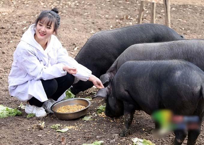 Zhang Zhiyuan bên đàn lợn đen của gia đình. Ảnh: Oriental Daily.