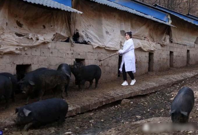 Zhiyuan mải tập trung nuôi lợn nên ba năm qua vẫn chưa có thời gian hẹn hò, tìm bạn trai.Ảnh: Oriental Daily.