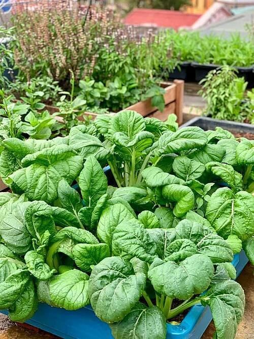 Bà mẹ Sơn La có thói quen sưu tầm hạt giống trong các lần đi công tác hoặc đặt mua trên mạng. Nhờ đó, cây trồng trong khu vườn nhỏ của gia đình chị rất phong phú, đa dạng.