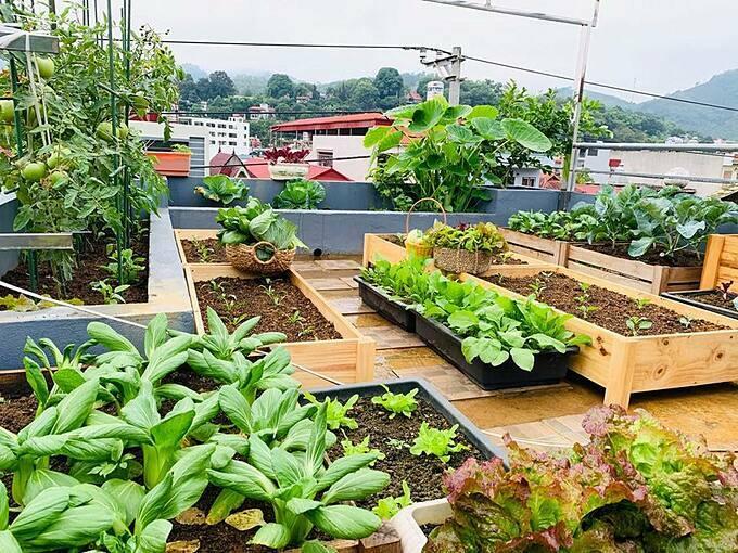 Chị Quý bắt đầu gây dựng khu vườn từ năm ngoái khi gia đình chị sửa nhà và với sự động viên từ ông xã cùng hai con của chị.