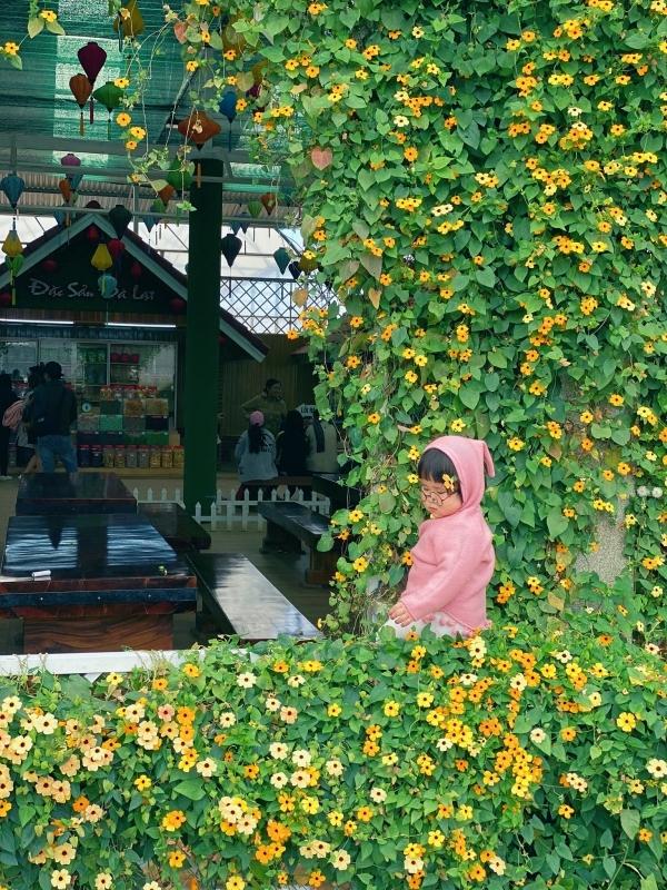 Tuệ Mẫn ngồi mơ mộng bên khung cửa đầy hoa leo màu vàng ở làng hoa Vạn Thành - một trong những địa điểm mà người lần đầu đến Đà Lạt muốn ghé thăm. Thời điểm này chỉ còn cách Festival hoa 2019 hơn một tuần, nơi này càng chăm chút hơn, nhiều loài hoa khoe sắc.