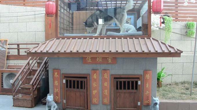 Căn biệt thự của ba con chó nhà ông Zhou. Ảnh: Ruptly.