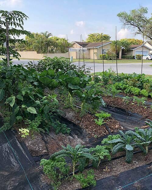 Công việc hiện tại của chị Tiên là chuyên gia dinh dưỡng và xây dựng một trang web riêng về đời sống. Còn chồng chị - anh Ruben làm kiến trúc sư. Các khu vực trồng rau, cây ăn quả được bố trí bao quanh ngôi nhà, cả mặt trước và sau.