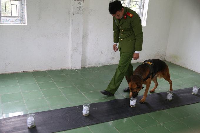 Chó nghiệp vụ khổ luyện