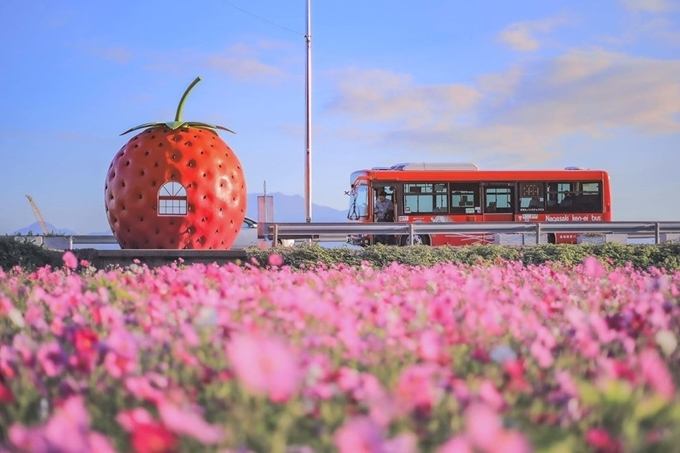 Sống ảo ngay nhà chờ xe buýt hoa quả tại Nhật Bản - ảnh 5