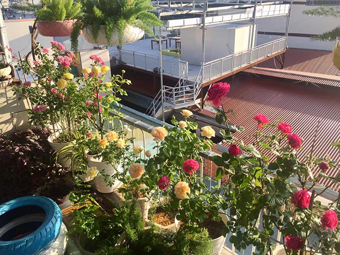 Muôn hoa đua nở trong khu vườn sân thượng của anh Phong. Anh trồng đủ loại hoa gồm: Hoa hồng, thanh tú, bướm đêm, sen đá, cây trúc đuôi chồn, lan mẫu tử, thài lài.