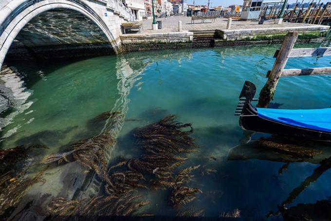 Văn phòng thị trưởng cũng báo cáo, việc thuyền bè ngừng hoạt động làm cho nước ở Venice trong xanh hơn, có thể nhìn thấy rong rêu dưới đáy. Trước đây, giao thông đường thuỷ đông đúc khiến cặn trầm tích dưới đáy thường xuyên bị xáo trộn và nổi lên mặt nước tạo nên màu đục ngầu.
