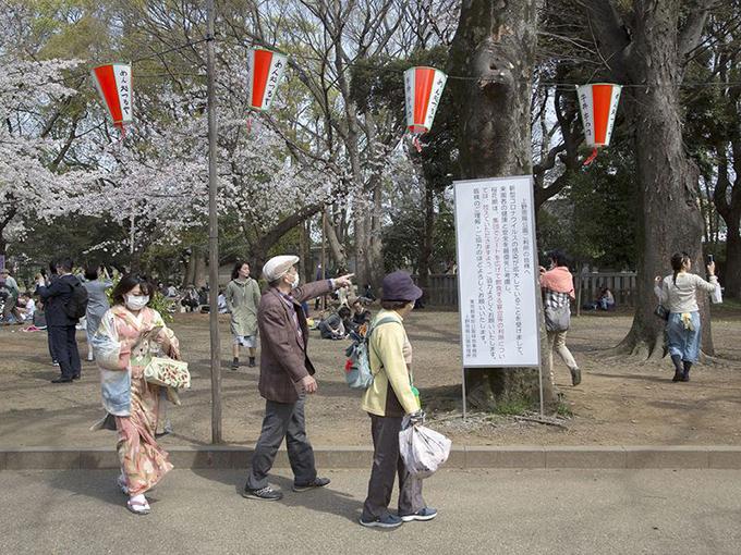 Theo các cơ quan khí tượng, mùa anh đào ở Nhật năm nay đến sớm hơn mọi năm, hoa bắt đầu nở vào ngày 14/3, sớm nhất từ trước đến nay tại Tokyo.
