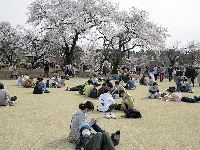 Nhưng bất chấp các cảnh báo trong vườn quốc gia, nhiều nhóm bạn, cặp đôi vẫn ngồi cạnh nhau để ăn uống dưới những cây hoa anh đào.Yuichiro Tanaka, một du khách đang dã ngoại với bạn bè tại đây, cho biết: Chúng tôi được yêu cầu hạn chế nhưng tôi muốn có ít nhất một bữa tiệc. Truyền thống hamani từ bao năm ở Nhật Bản vẫn có hoạt động ăn uống dưới tán hoa để chào đón mùa xuân. Tôi đã tuân thủ quy định bằng cách đeo khẩu trang giảm bớt từ nhiều bữa tiệc xuống chỉ một buổi duy nhất.