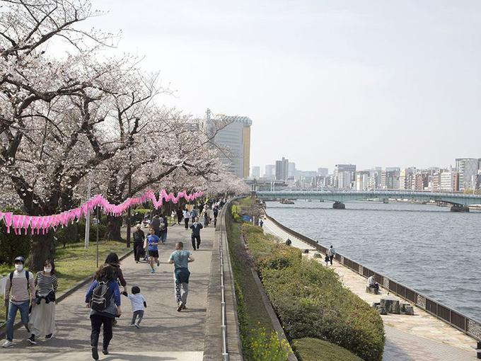 Người đi bộ đeo khẩu trang, ngắm hoa anh đào bên sông Sumida, Tokyo.Kanon Sagara, một học sinh trung học 17 tuổi, cho biết, bản thân đã phải ở trong nhà một thời gian dài vì trường học đóng cửa, do đó, việc ngắm hoa là cơ hội tốt để hít thở không khí bên ngoài.