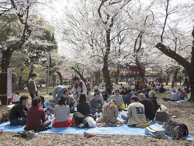 Nhiều lễ hội hamani lớn đã bị huỷ bỏ. Các hoạt động ăn uống, dã ngoại, ngắm hoa đều là tự phát của người dân.