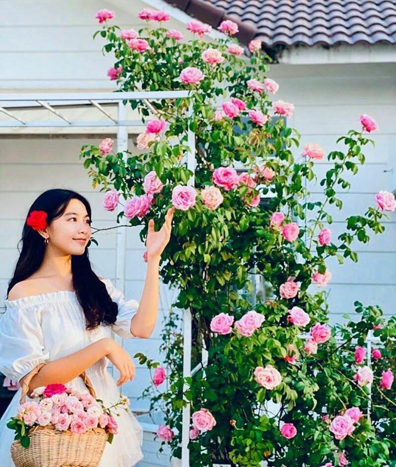 Riêng hoa hồng, doanh nhân Dạ Thảo trồnghơn trăm gốc. Các gốc hồngAnh, Pháp, Nhật và hồng cổ được chăm sóc bằng phương pháp hữu cơ, bốn mùa đua nhau khoe sắc.Trong ảnh là con gái lớn Lọ Lem của vợ chồng Dạ Thảo - Quyền Linh.