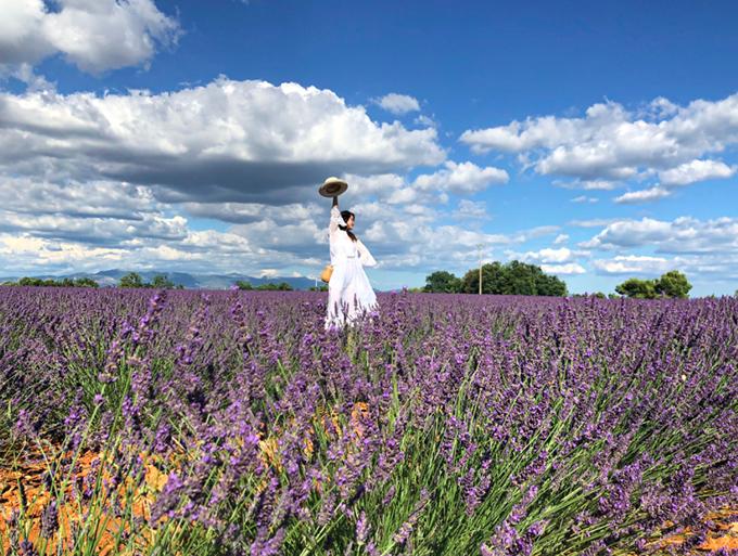 [Caption]cánh đồng lavender ở provence tháng 7 18