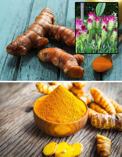 Nghệ  Nghệ được dùng nhiều ở châu Á, đặc biệt là Ấn Độ. Không chỉ là loại gia vị nổi tiếng, cây nghệ còn được biết đến bởi loài hoa rất đẹp Củ nghệ không chỉ là một loại gia vị nổi tiếng thế giới, mà còn là một loại cây có hoa đẹp. Nhà cung cấp chính của củ nghệ là Ấn Độ. Ngoài ra, gia vị này thực sự là một gốc. Rễ được làm sạch khỏi mặt đất và nhúng vào nước sôi trong một phút. Điều này kích hoạt các tế bào gốc, bắt đầu tiết ra một vết màu cam. Sau đó, rễ được sấy khô và nghiền thành bột. 'Hình dáng nguyên thủy' của các loại gia vị