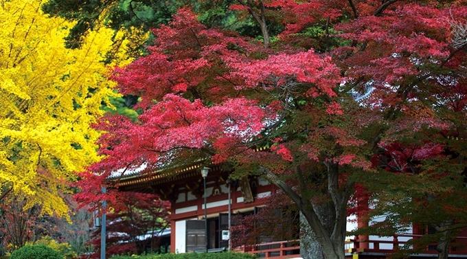 Còn vào tháng 11 đến tầm đầu tháng 12, những cây phong già, bạch quả trong vườn chuyển màu lá vàng, đỏ rực rỡ, thích hợp cho những chuyến ngắm cảnh mùa thu.