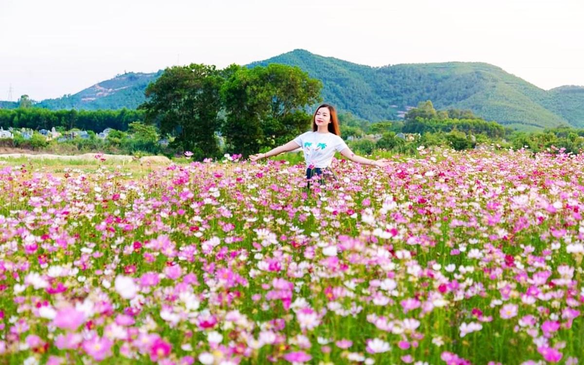 Thảm hoa nhái nở rộ tại Huế mùa này, dễ gieo trồng, sinh trưởng nhanh, chịu được thời tiết khắc nghiệt và nhiều màu bắt mắt.